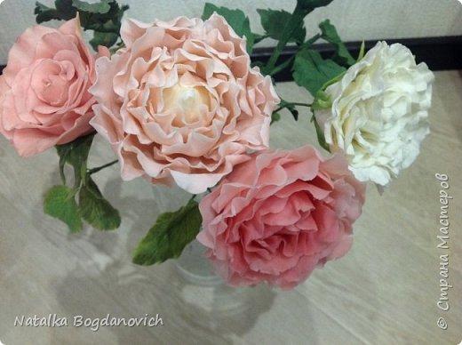 мои первые крупные розы фото 14