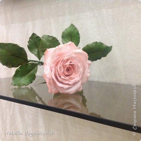 мои первые крупные розы фото 17