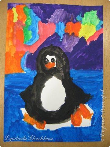 пингвины фото 3