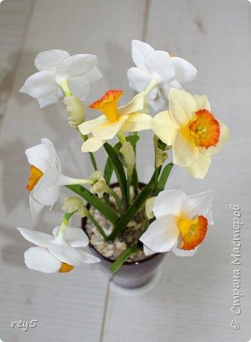 Новая работа - Нарциссы из полимерной глины фото 3