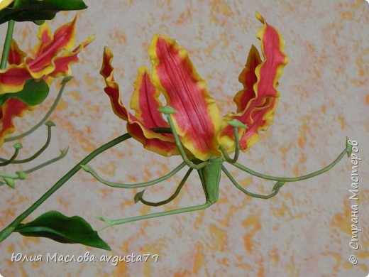 Удивительный и загадочный цветок - глориоза . фото 3