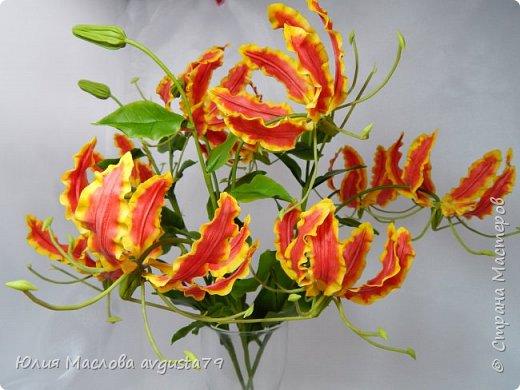 Удивительный и загадочный цветок - глориоза . фото 1
