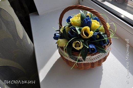мини-тюльпаны фото 5