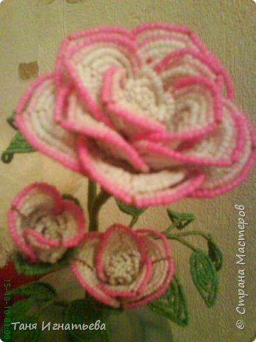 Розы с двойным кантом фото 2