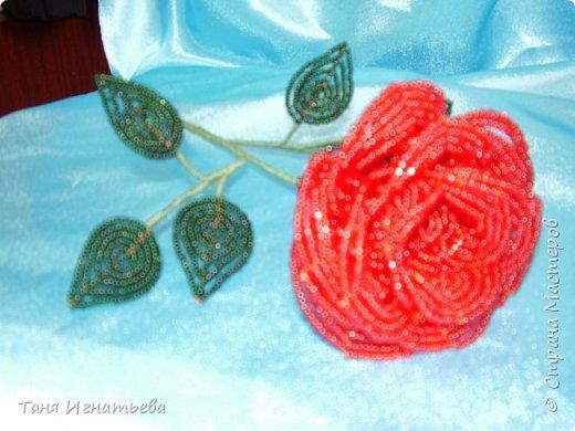 Розы с двойным кантом фото 7