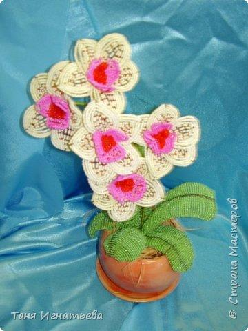 Орхидея Фаленопсис. Сделала её года 4 назад, по книге. фото 6