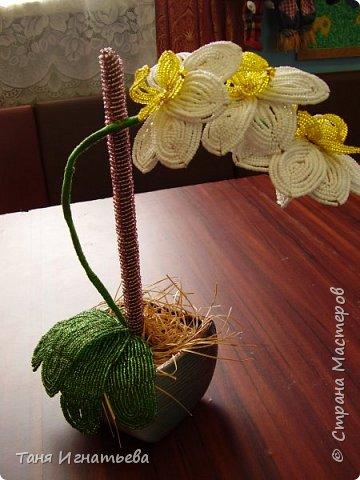 Орхидея Фаленопсис. Сделала её года 4 назад, по книге. фото 1