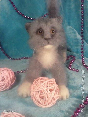 Игривый котенок фото 1