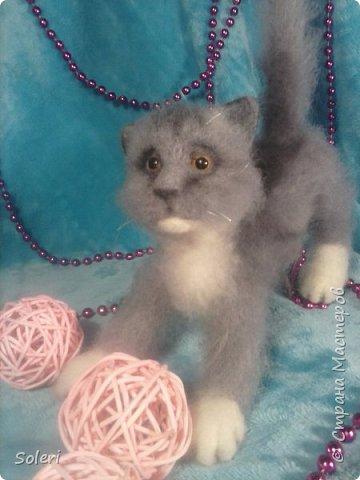 Игривый котенок фото 2