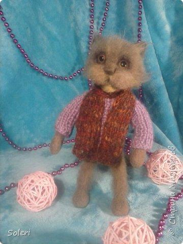 Кот холостяк. фото 1