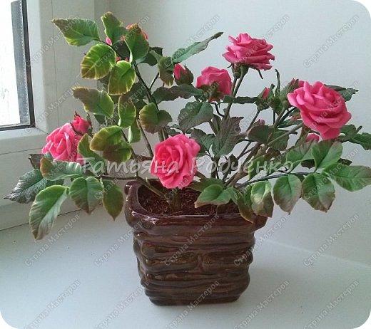 Роза кустовая. фото 2