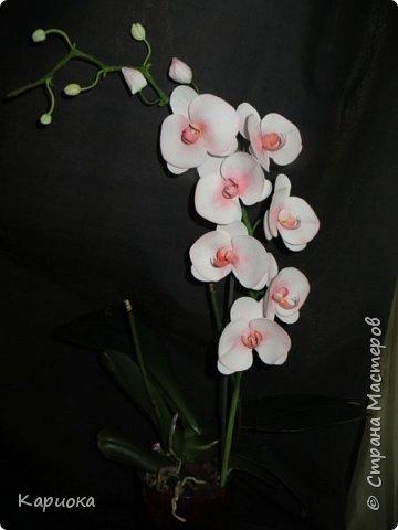 На подарки своялись еще вот такие веточки орхидеи. фото 1