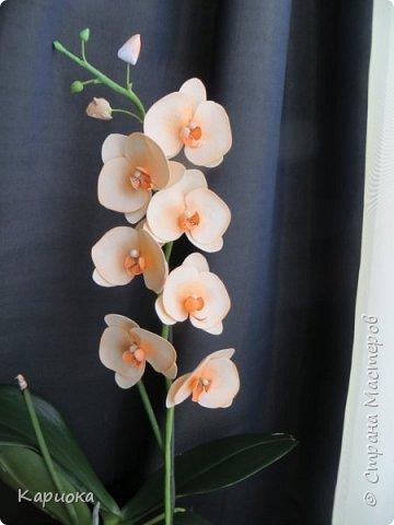 На подарки своялись еще вот такие веточки орхидеи. фото 4