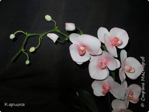На подарки своялись еще вот такие веточки орхидеи. фото 2