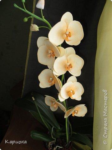 На подарки своялись еще вот такие веточки орхидеи. фото 6