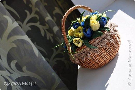 мини-тюльпаны фото 6