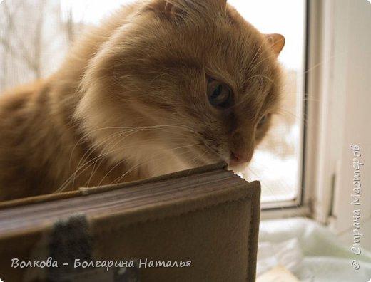 Всем привет! Снова блокнот, и это 3-й с Фаризкой - кошкой сестры:) фото 15