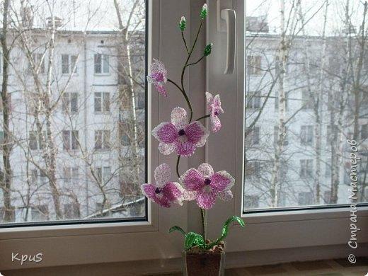 """Многомесячное """"производство"""" орхидей из бисера продолжается. Эта работа сделалась случайно. Старшая дочь решила тоже попробовать свои силы в бисероплетении. Но, как обычно, запал быстро прошел, оставив мне в наследство несколько лепестков. Что бы они не валялись без дела, я сделала еще цветов и собрала их в эту композицию. фото 3"""