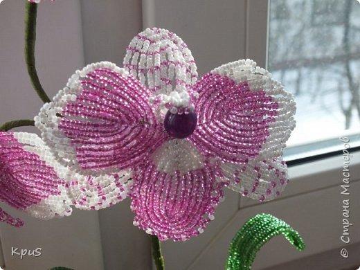 """Многомесячное """"производство"""" орхидей из бисера продолжается. Эта работа сделалась случайно. Старшая дочь решила тоже попробовать свои силы в бисероплетении. Но, как обычно, запал быстро прошел, оставив мне в наследство несколько лепестков. Что бы они не валялись без дела, я сделала еще цветов и собрала их в эту композицию. фото 4"""