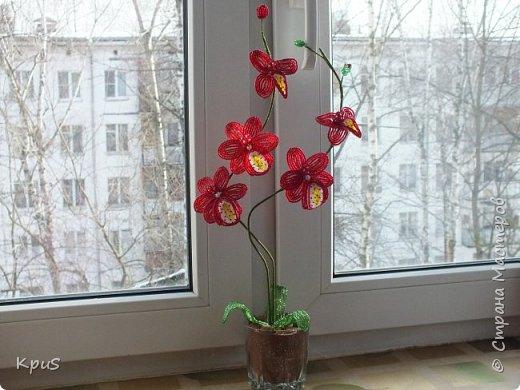 """Многомесячное """"производство"""" орхидей из бисера продолжается. Эта работа сделалась случайно. Старшая дочь решила тоже попробовать свои силы в бисероплетении. Но, как обычно, запал быстро прошел, оставив мне в наследство несколько лепестков. Что бы они не валялись без дела, я сделала еще цветов и собрала их в эту композицию. фото 5"""