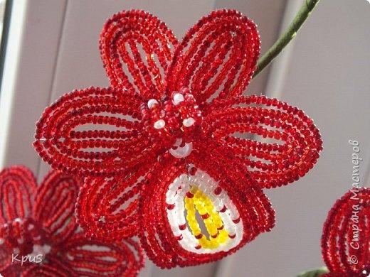 """Многомесячное """"производство"""" орхидей из бисера продолжается. Эта работа сделалась случайно. Старшая дочь решила тоже попробовать свои силы в бисероплетении. Но, как обычно, запал быстро прошел, оставив мне в наследство несколько лепестков. Что бы они не валялись без дела, я сделала еще цветов и собрала их в эту композицию. фото 6"""