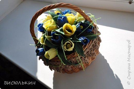 мини-тюльпаны фото 1