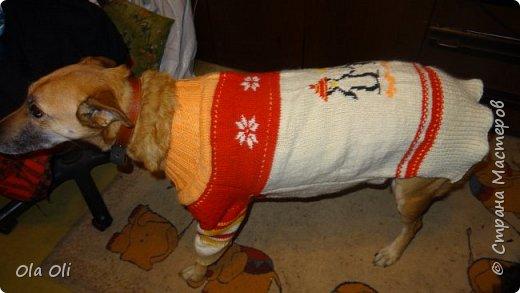 Шерстяной костюм для собаки. фото 2