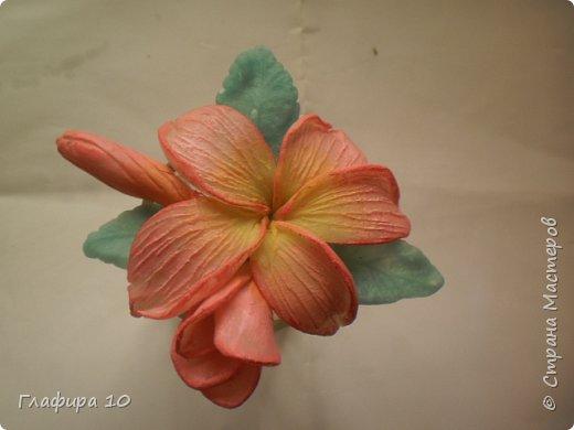 Очень люблю лилии фото 2