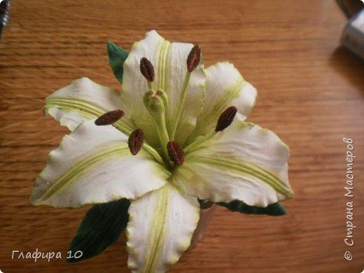 Очень люблю лилии фото 1