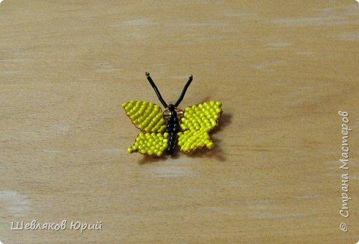 Скорпион фото 6
