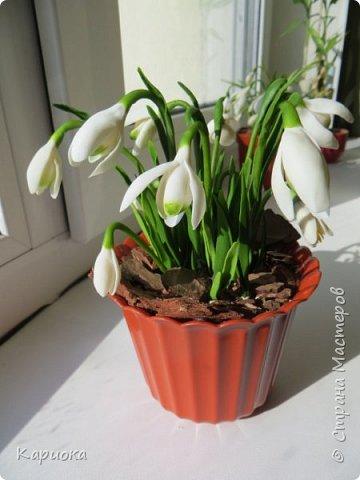 """Здравствуй СМ!! У меня  уже весна, хотя за окном еще  и немного снега! наконец """"посадила"""" свои подснежники и теперь они меня радуют!! Пока сама под впечатлением и весенним настроением - по этому фото много!) Надеюсь не надоем вам! фото 11"""