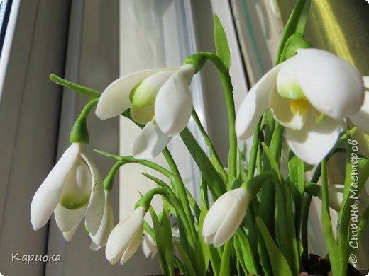 """Здравствуй СМ!! У меня  уже весна, хотя за окном еще  и немного снега! наконец """"посадила"""" свои подснежники и теперь они меня радуют!! Пока сама под впечатлением и весенним настроением - по этому фото много!) Надеюсь не надоем вам! фото 12"""