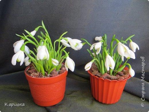 """Здравствуй СМ!! У меня  уже весна, хотя за окном еще  и немного снега! наконец """"посадила"""" свои подснежники и теперь они меня радуют!! Пока сама под впечатлением и весенним настроением - по этому фото много!) Надеюсь не надоем вам! фото 2"""