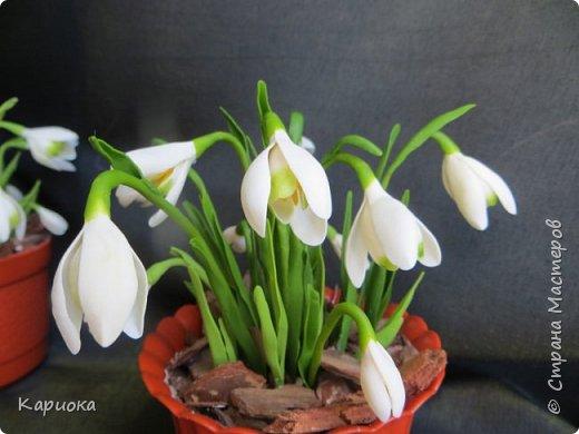 """Здравствуй СМ!! У меня  уже весна, хотя за окном еще  и немного снега! наконец """"посадила"""" свои подснежники и теперь они меня радуют!! Пока сама под впечатлением и весенним настроением - по этому фото много!) Надеюсь не надоем вам! фото 7"""
