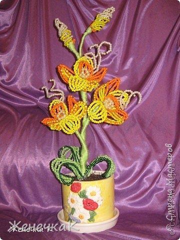 Моя бисеромания и орхидеяманиЯ! фото 15