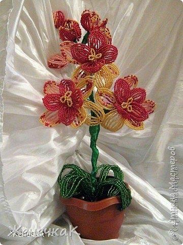 Моя бисеромания и орхидеяманиЯ! фото 1