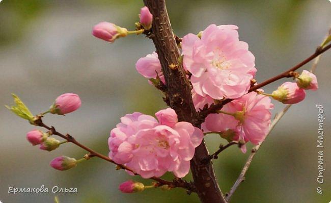 """"""" Репетиция весны""""-так называется выставка цветов, которая открылась в Аптекарском огороде. Более 7000 луковичных были заранее высажены, что бы порадовать всех нас своей красотой на два месяца раньше обычного срока. Любуйтесь.... фото 27"""