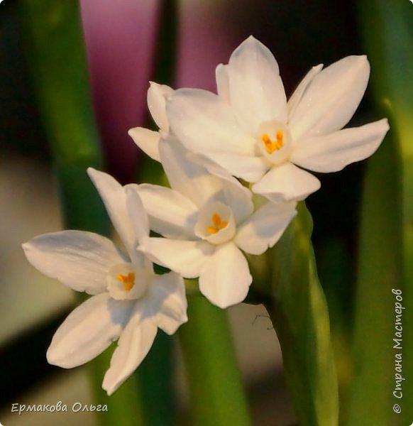 """"""" Репетиция весны""""-так называется выставка цветов, которая открылась в Аптекарском огороде. Более 7000 луковичных были заранее высажены, что бы порадовать всех нас своей красотой на два месяца раньше обычного срока. Любуйтесь.... фото 22"""
