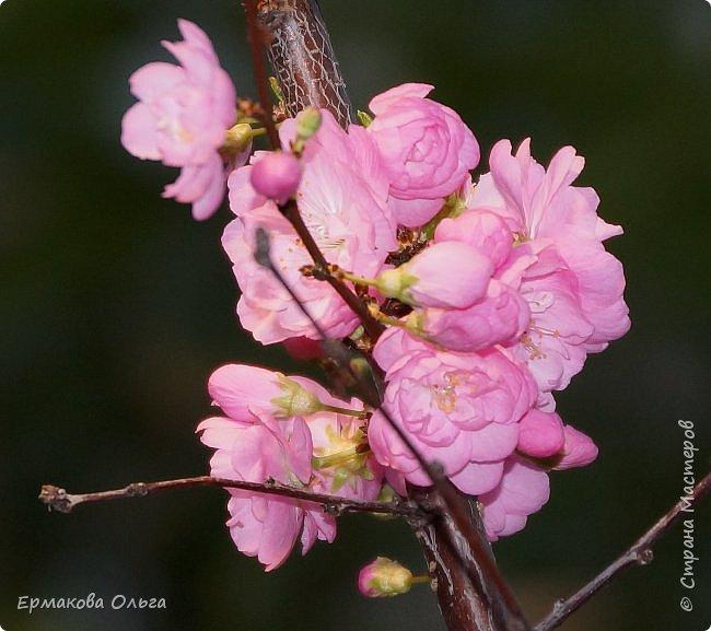 """"""" Репетиция весны""""-так называется выставка цветов, которая открылась в Аптекарском огороде. Более 7000 луковичных были заранее высажены, что бы порадовать всех нас своей красотой на два месяца раньше обычного срока. Любуйтесь.... фото 26"""