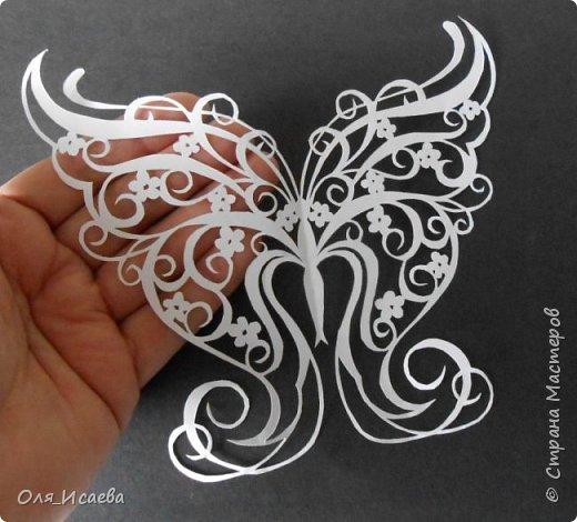 Бабочка фото 3