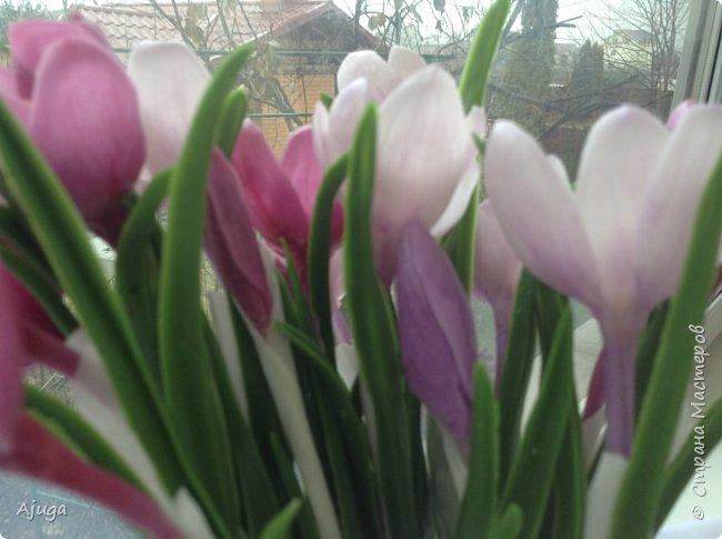 Крокусы к первому дню весны!!Холодный фарфор. Ручная работа. фото 9