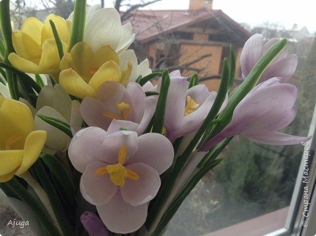 Крокусы к первому дню весны!!Холодный фарфор. Ручная работа. фото 21
