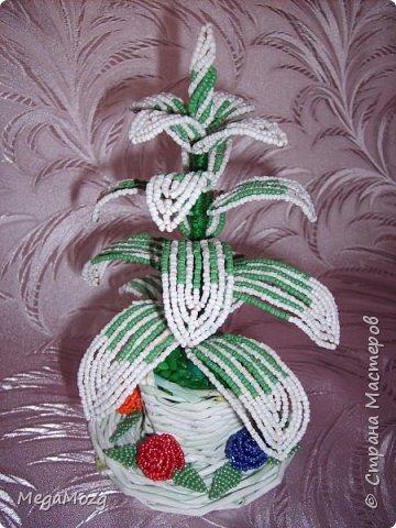 """Была летом у бабушки и увидела у неё новый цветок: листья бело-зелёные, из горшка торчит в разные стороны. Названия не знала, но мне очень понравились полосатые листочки, вот я и решила попробовать сплести его из бисера, тока добавила немного фантазии и выстроила цветок иначе, чем он был в реале. Просто мне так понравилось!!! Горшочек сплела из газетной лозы, и украсила ленивыми маленькими розочками))) Потом в интернете искала название цветка, и если правильно выбрала, то это """"Традесканция белоцветковая"""". Жаль, что я тогда не знала, что он ещё и цветёт, а то бы и цветочков сделала. Вот такая была разминочка перед плетением лилий =)) фото 1"""