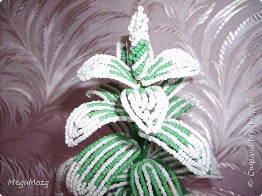 """Была летом у бабушки и увидела у неё новый цветок: листья бело-зелёные, из горшка торчит в разные стороны. Названия не знала, но мне очень понравились полосатые листочки, вот я и решила попробовать сплести его из бисера, тока добавила немного фантазии и выстроила цветок иначе, чем он был в реале. Просто мне так понравилось!!! Горшочек сплела из газетной лозы, и украсила ленивыми маленькими розочками))) Потом в интернете искала название цветка, и если правильно выбрала, то это """"Традесканция белоцветковая"""". Жаль, что я тогда не знала, что он ещё и цветёт, а то бы и цветочков сделала. Вот такая была разминочка перед плетением лилий =)) фото 5"""