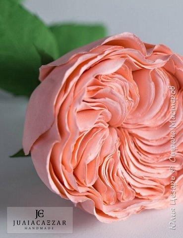 Пионовидная роза Дэвида Остина из фоамирана фото 3