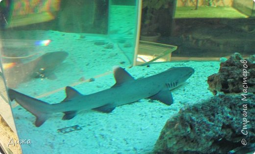 """Мой первый фоторепортаж о том, как мы всей семьёй ходили в развлекательный центр Планета. Там мы случайно увидели выставку морских рыб. Мне очень понравилась выставка. Я таких рыб видела только в книжке. Это рыба-Клоун. Я про него смотрела мультфильм """"В поисках Немо"""".  фото 11"""