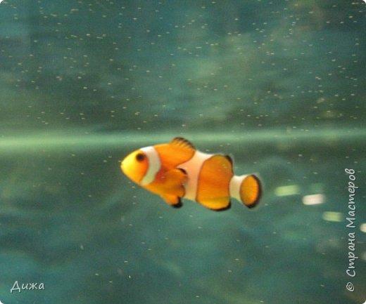 """Мой первый фоторепортаж о том, как мы всей семьёй ходили в развлекательный центр Планета. Там мы случайно увидели выставку морских рыб. Мне очень понравилась выставка. Я таких рыб видела только в книжке. Это рыба-Клоун. Я про него смотрела мультфильм """"В поисках Немо"""".  фото 1"""
