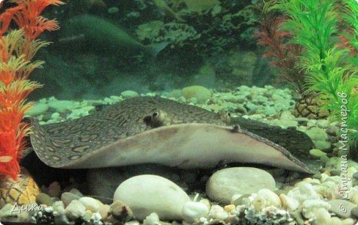 """Мой первый фоторепортаж о том, как мы всей семьёй ходили в развлекательный центр Планета. Там мы случайно увидели выставку морских рыб. Мне очень понравилась выставка. Я таких рыб видела только в книжке. Это рыба-Клоун. Я про него смотрела мультфильм """"В поисках Немо"""".  фото 3"""
