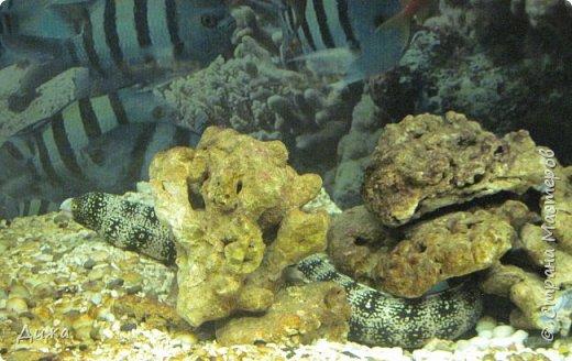 """Мой первый фоторепортаж о том, как мы всей семьёй ходили в развлекательный центр Планета. Там мы случайно увидели выставку морских рыб. Мне очень понравилась выставка. Я таких рыб видела только в книжке. Это рыба-Клоун. Я про него смотрела мультфильм """"В поисках Немо"""".  фото 7"""