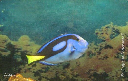 """Мой первый фоторепортаж о том, как мы всей семьёй ходили в развлекательный центр Планета. Там мы случайно увидели выставку морских рыб. Мне очень понравилась выставка. Я таких рыб видела только в книжке. Это рыба-Клоун. Я про него смотрела мультфильм """"В поисках Немо"""".  фото 2"""